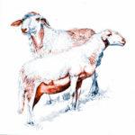 mostra pecore vinadio